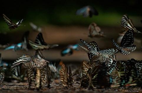 Chùm ảnh thiên nhiên hoang dã ở Việt Nam