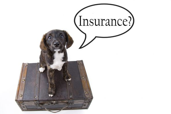 Hidden Costs of Owning Pets and How to Reduce Them