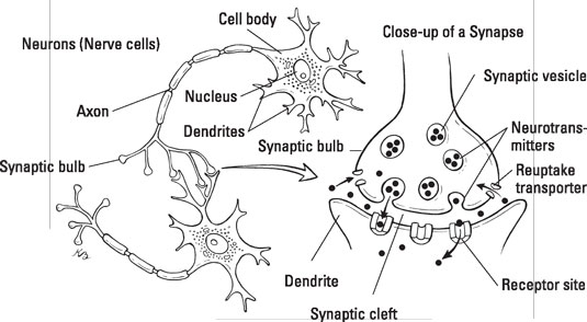 Brain Structure and Function of Those with Bipolar
