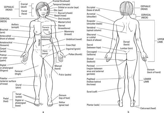 Body Language For Dummies Pdf
