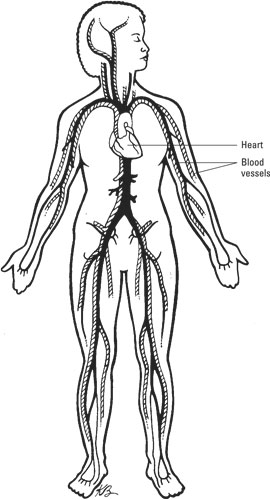Body Systems to Know for the Medical Billing & Coding