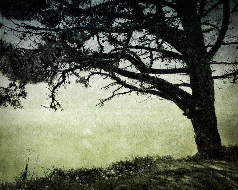 Big Sur, CA Spring 2013