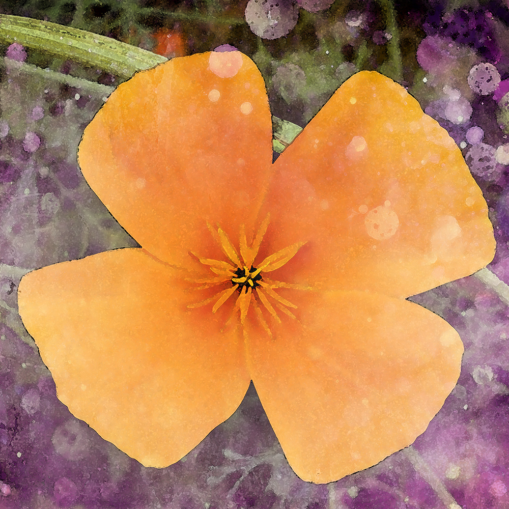 a photomanipulated image of a california poppy