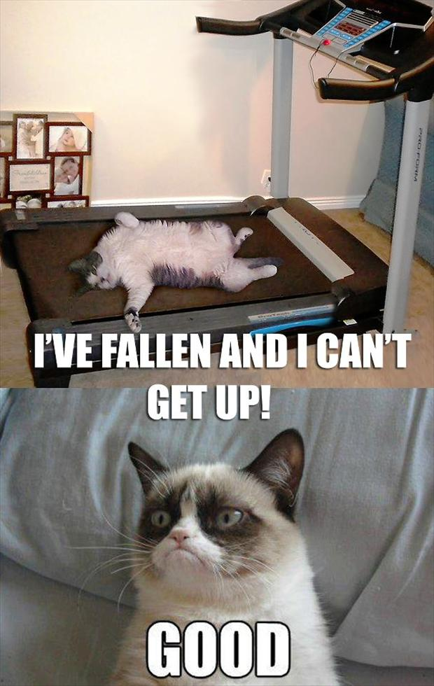 grumpy cat treadmill has fallen and can not get up