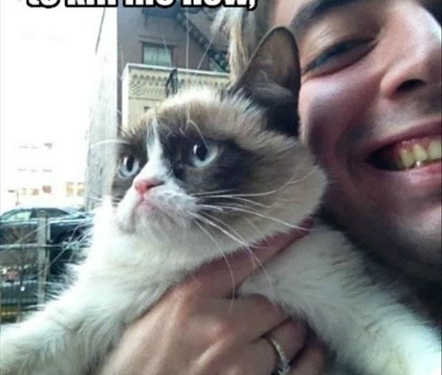 Return To Funny Pictures  Pics This Image About Grumpy Cat
