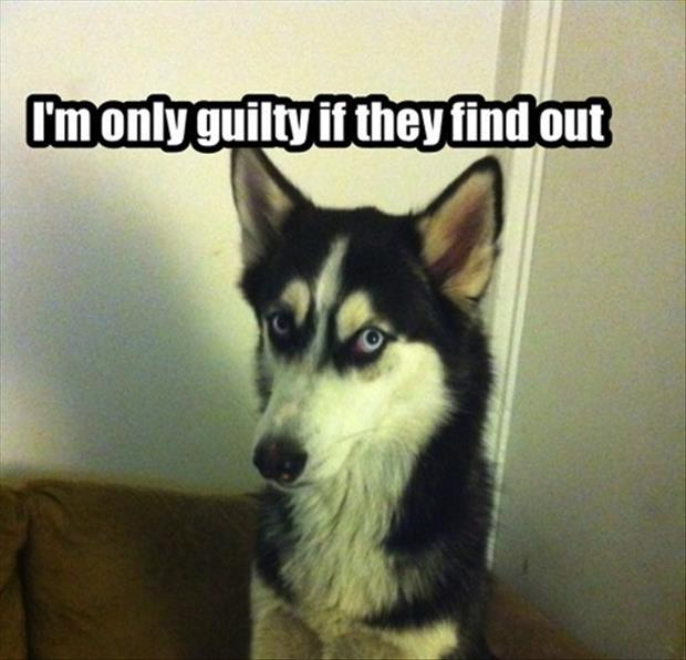 Image result for guilty dog meme