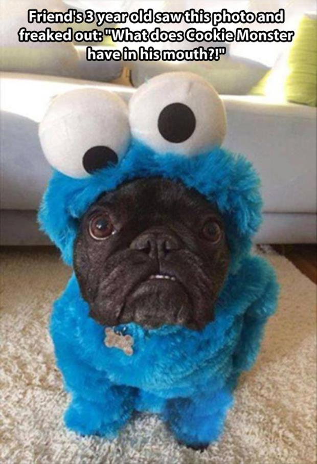 dog in cookie monster costume