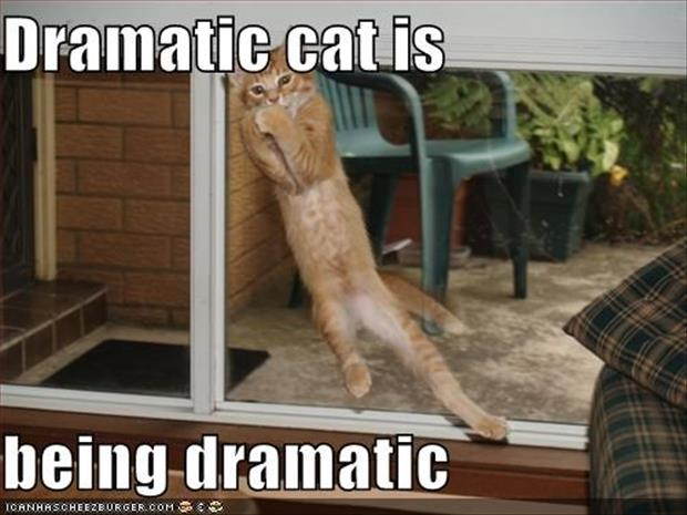 funny dramatic animals (11)