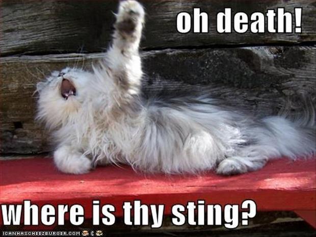 funny dramatic animals (7)
