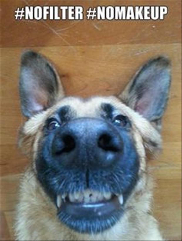 24 Animals Who Take Better Selfies Than You