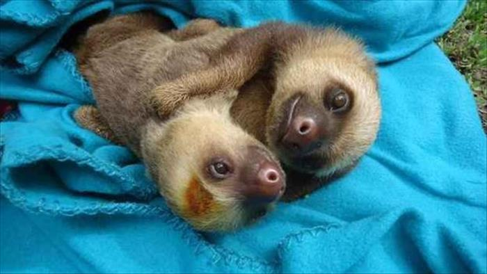 Everyone Needs A Cuddle Buddy Animal Edition 23 Pics