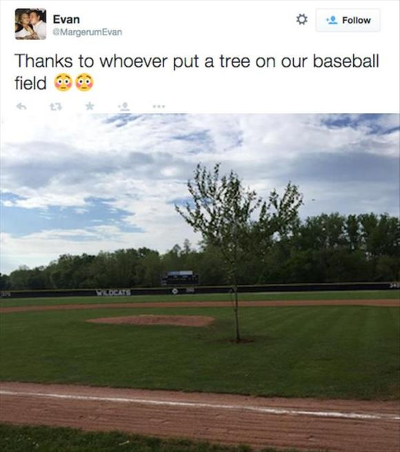 pictures tree