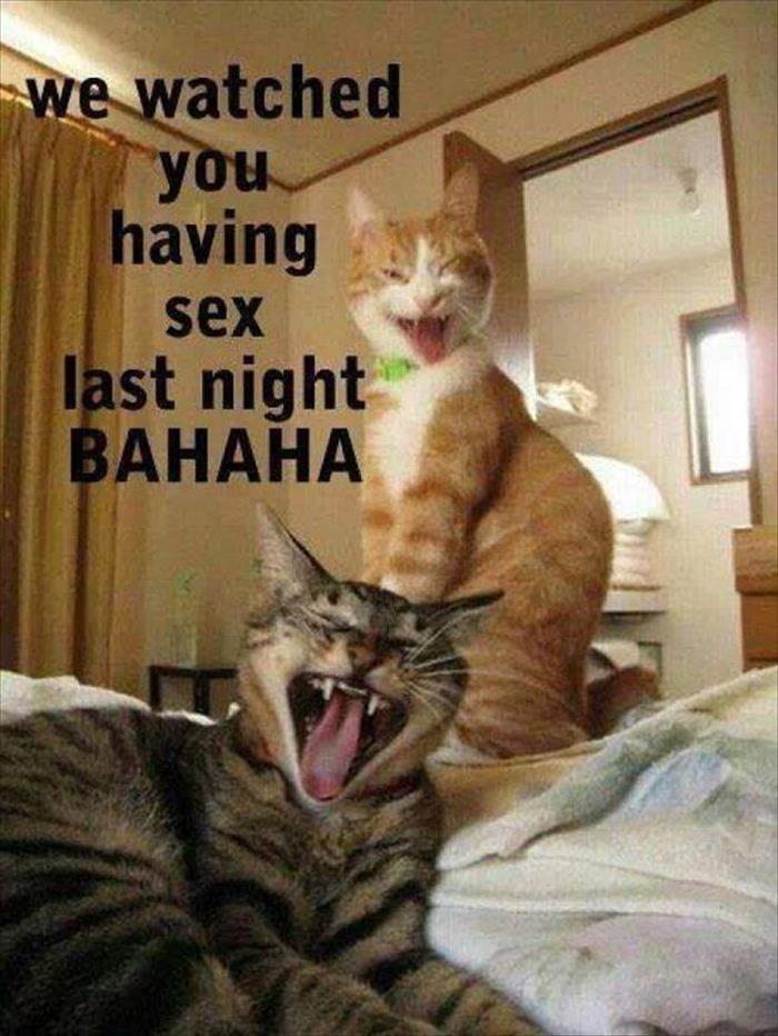 Funny Animal Memes Happy Friday