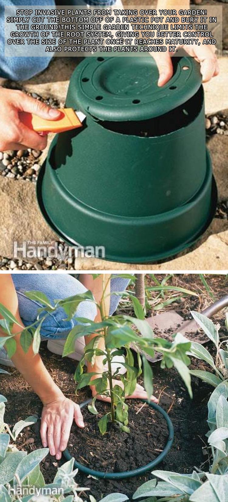 Stop Invasive Plants