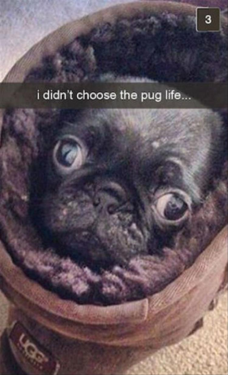 The Funny Dogs Of Snapchat  15 Pics