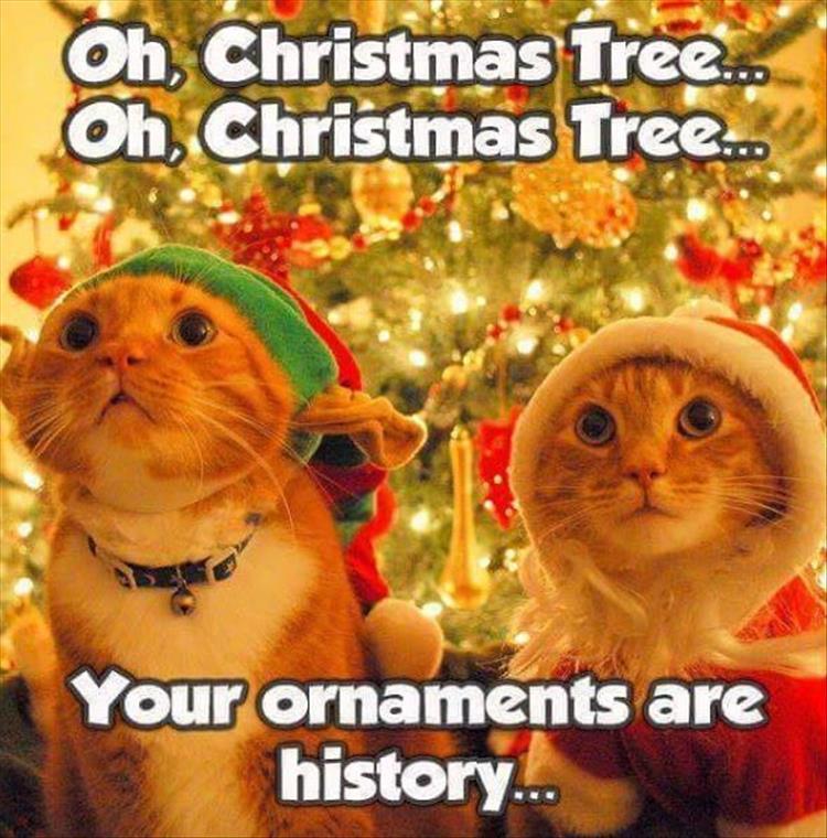 Funny Christmas Animals