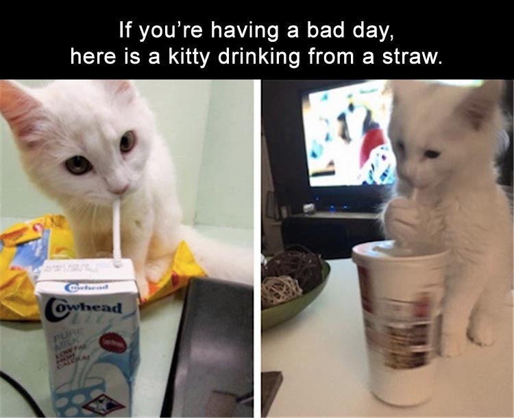 Memes Funny About Drinking