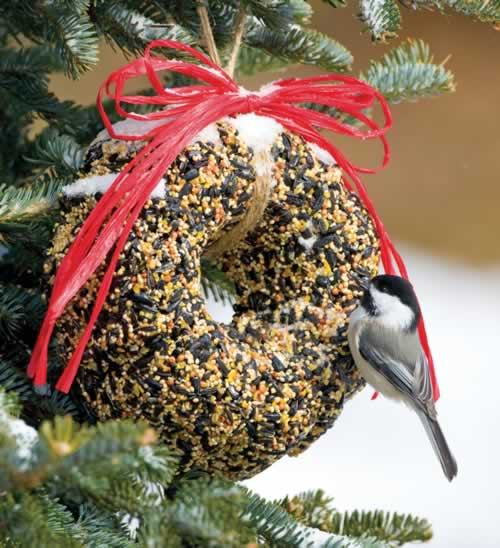 Traditional Bird Seed Wreath