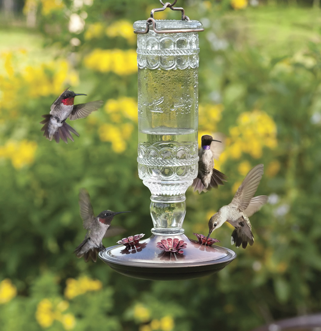 Clear Antique Glass Hummingbird Feeder