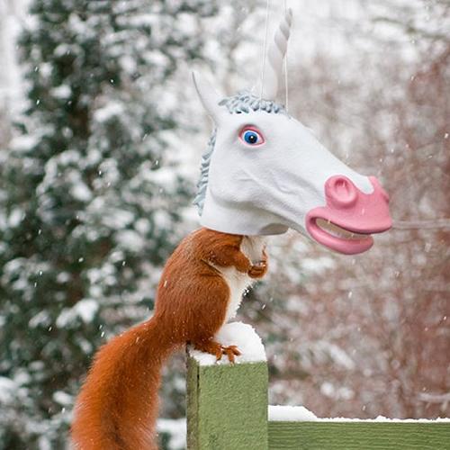 Duncraftcom Big Unicorn Head Squirrel Feeder
