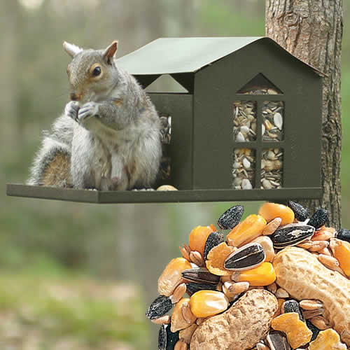 Metal Squirrel Feeder  Bird Seed Package