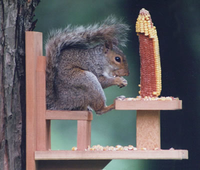 squirrel feeder chair wheelchair x games backyard diversion feeders, wildlife feeders