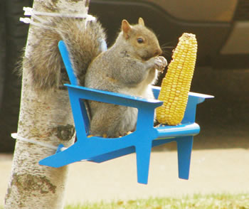 squirrel feeder chair cohesion xp 2 1 gaming duncraft.com: adirondack