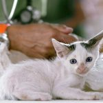 Platinum Care Plans from Dunelm Veterinary Group. Find Out More