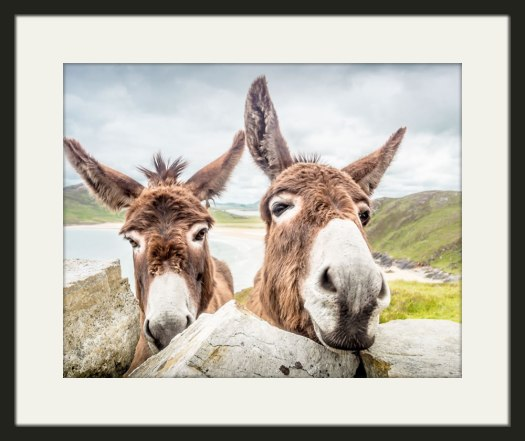 Donegal Donkeys