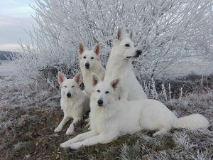 rudelbild-winter