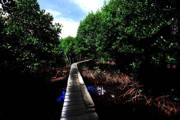 KLHK Sebut Pelepasan Kawasan Hutan 91% Terjadi Sebelum Era Jokowi
