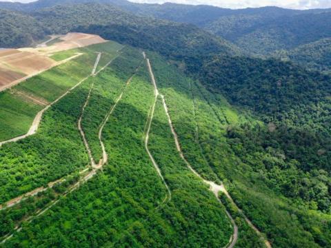 Kementerian LHK Hentikan Proyek Netral Karbon yang Melanggar Aturan