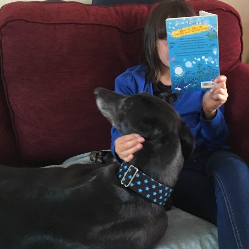 Is a greyhound right for me?