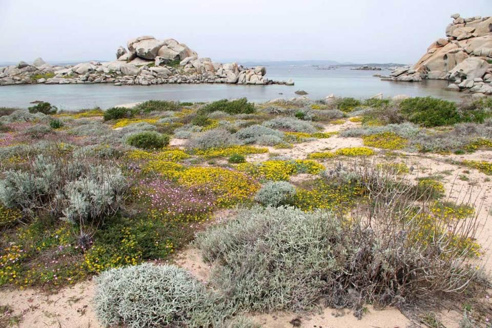 Akdeniz bitki örtüsü mevsim değişikliklerine karşı kırılgan yapısı ile çölleşmeye son derece uygun.