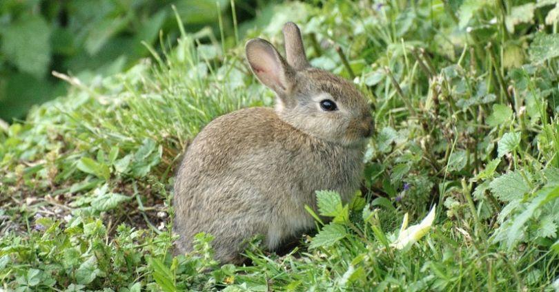 Tavşanlar ve fareler kozmetik testler için en çok kullanılan hayvanların başında geliyor.