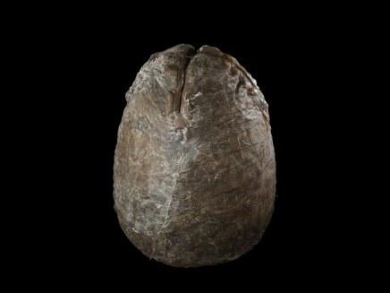 Aliens filminden Xenomorph yumurtası - 1295 Dolar
