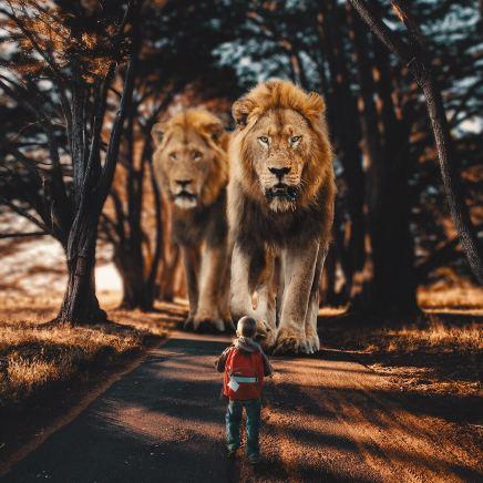 giant-animals-mani-photography-9
