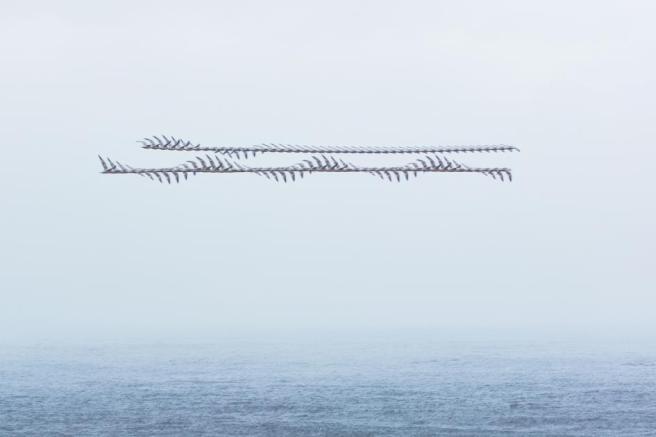 moving-birds-flight-paths-patterns-sky-10.adapt.945.1