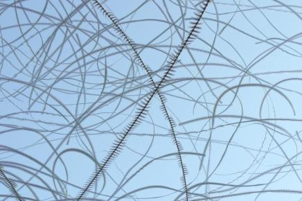 moving-birds-flight-paths-patterns-sky-6.adapt.945.1