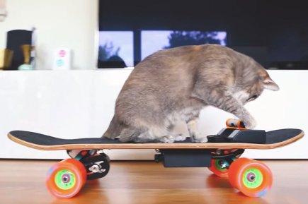 electric-skateboard-cat-designboom-02