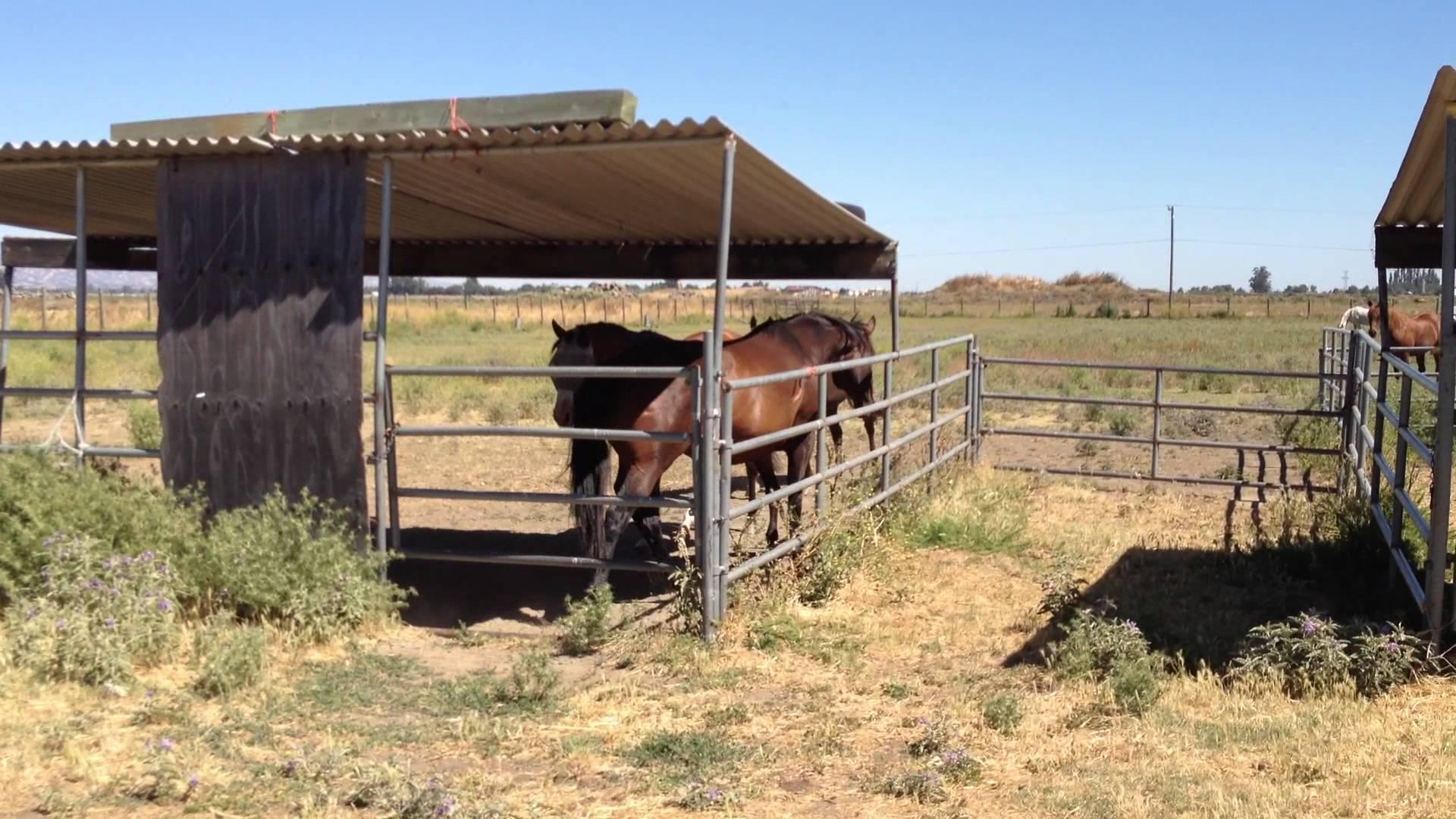 horse shelter design