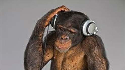 Atlanta: Chimpanzee Bhi Mauseeqi Ky Shauqeen Nikly