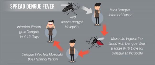 spread-dengue-fever