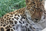 Features - leopard
