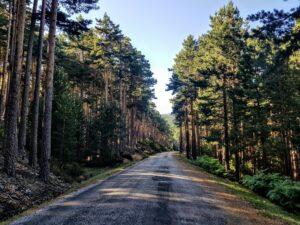 Camino forestal de Castroviejo