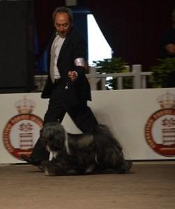 Monaco-exposition-internationale-07-mai-2017 juge M. jean-françois VANAKEN