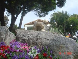 A'yang chen mo des sources du salaison 2007