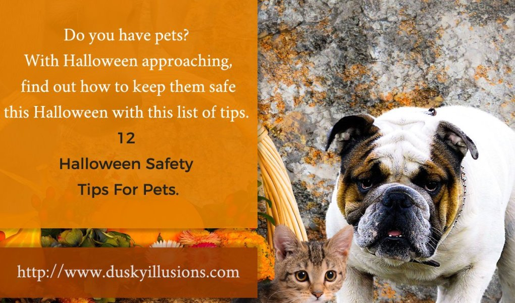 12 Halloween Safety Tips For Pets