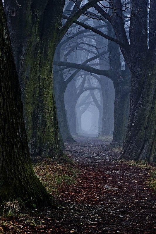 trees, 2