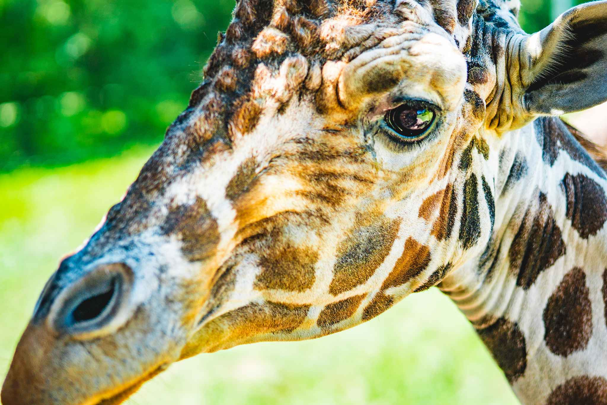 Fort Wayne Children's Zoo